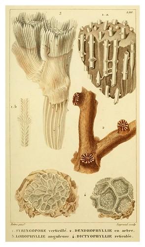 012-Manuel d'actinologie ou de zoophytologie (Volume plates) 1834- H.-M. Ducrotay Blainville