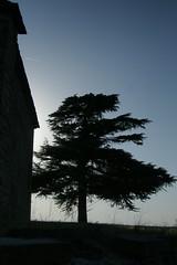 Bergolo - Land Art - (castelli_sabbia) Tags: verde alberi italia estate piemonte cuneo vacanza langhe ingiro bergolo