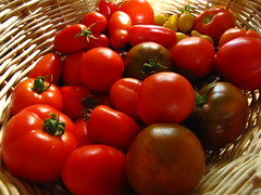 I'm averaging 4-6 pounds of tomatoes harvested a day... (peonyandbee) Tags: garden tomato harvest organic heirloomtomato