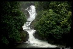 Gorgeous vibhooti falls (Srikanthap) Tags: monsoon yana sirsi uttarakannada yellapur magod unchalli sathodi moistdeciduousforest sahasralinga