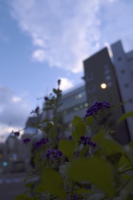 夏、東京、午後六時
