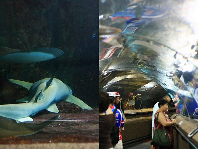 Sentosa Aquarium Shark and Tunnel
