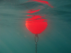buoy (cyberjani) Tags: sea bay underwater piran adriatic bestcapturesaoi elitegalleryaoi mygearandme
