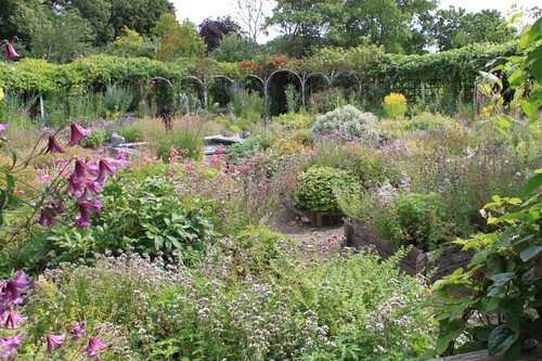 20110805_IMG_1569_herb-garden