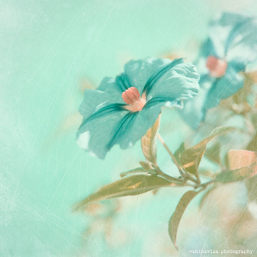 Turquoise by Vanina Vila {Photography}