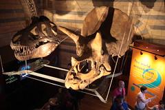 Dinosaur bones (San Diego Shooter) Tags: uk london museum europe dinosaur dinosaurs dinosaurbones londonmuseumofnaturalhistory londonmuseumofnaturalhistorydinosaurexhibit nathanruperteurope2011
