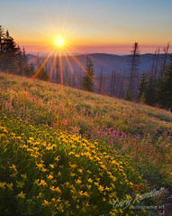 Golden Rays of Morning Light (Gary Randall) Tags: flowers sun sunshine oregon sunrise mthood wildflowers mounthood cooperspur cloudcapinn garyrandall dsc95372