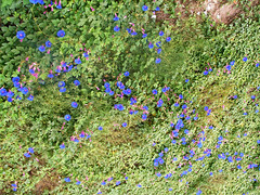 Park Gell (Grigory A) Tags: barcelona flowers blue flower spain view catalonia gaud gell
