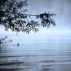 (Marcel Cavelti) Tags: mist lake see nebel crestasee img3447bearb
