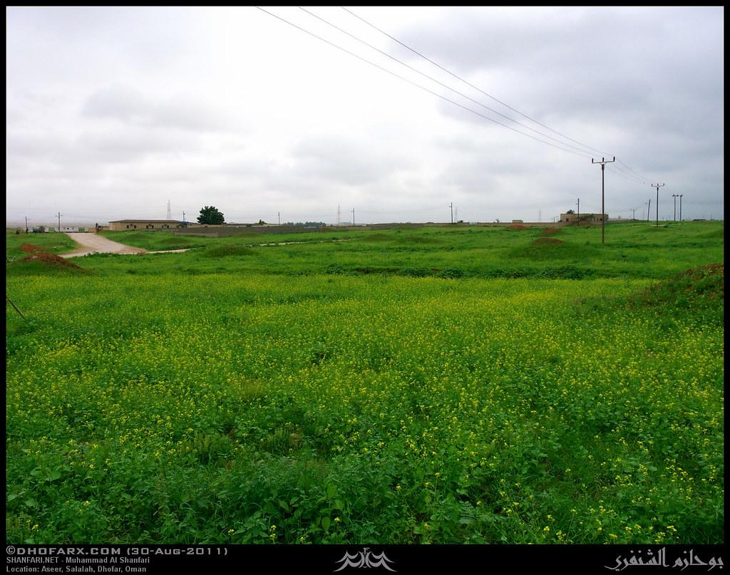 وعقبة أسير ظفار، بتاريخ 30-8-2011 6098848110_1e4697eb3