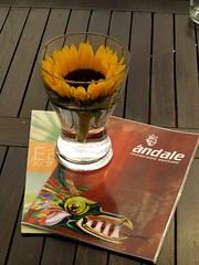 Sunflower in a Glass (saxonfenken) Tags: flower glass germany menu table bavaria restaurant sunflower 111 ulm day12 gamewinner herowinner pregamesweepwinner 111misc