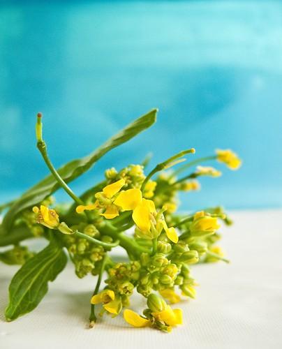IMG_0978 菜心花, Chinese Mustard Green Flowers