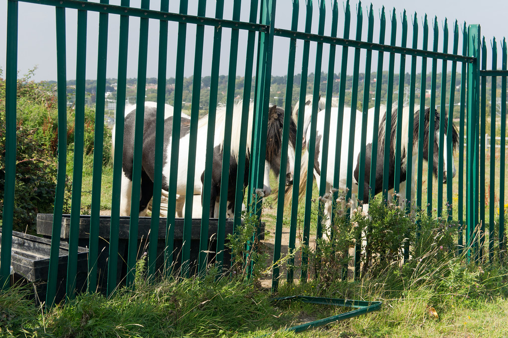 Lehaunstown Road - Some Lonely Horses