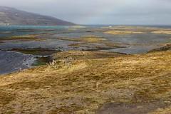 drangnes - iceland - 11 (hors-saison) Tags: island iceland islandia islande izland  islanda islndia ijsland islanti