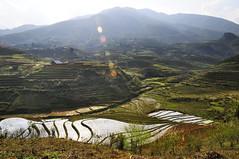 45_LAO38570069 (TC Yuen) Tags: vietnam sapa hmong terracefarming locai