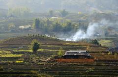 45_LAO76140070 (TC Yuen) Tags: vietnam sapa hmong terracefarming locai