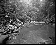 One-A-Day, 8/4/11 Blue Hen Falls (mat4226) Tags: longexposure morning blue trees bw tree film water oneaday early diy waterfall rocks stream decay wideangle super falls 8x10 hp5 hen f8 ilford largeformat n1 zonesystem schneider filmphotography eastmankodak superwide f32 sheetfilm angulon 11100 pyrocathd homeprocessed 121mm widetonalrange eastmancommercialb compensatingdeveloper dilutedeveloper believeinfilm