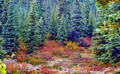Autumn in Denali - Alaska (blmiers2) Tags: travel autumn fall nature alaska landscape nikon denali d3100 blm18 blmiers2