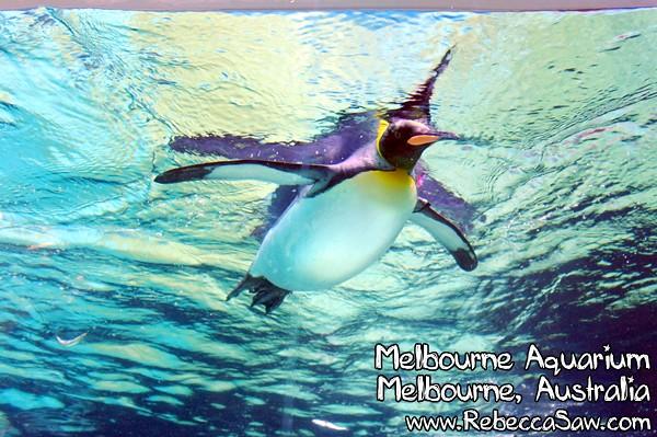 MELBOURNE AQUARIUM-18