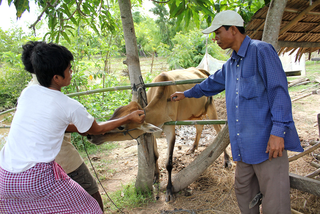 Cambodge-auxiliaire