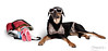 Kayce is ready for the beach... (chad.latta) Tags: dog chien beach sunglasses costume nikon chad suit perro bathing latta kayce d80