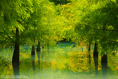 (nodie26) Tags: lake tree water pine sunrise mirror tour taiwan    hualien                    aplusphoto