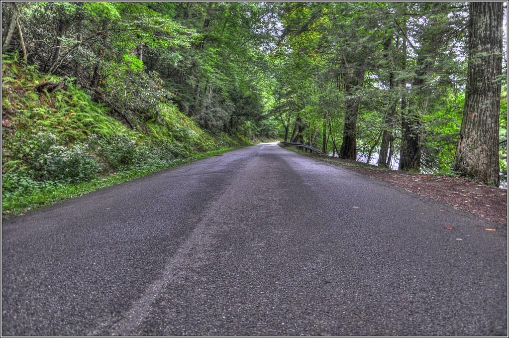 Cooks Forest HDR Nature / Landscape