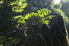 plant (Little Raven) Tags: park mountain mountains nature forest asia southeastasia vietnam northern sapa vitnam hamrong hoanglienson tonkinesealps