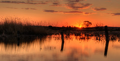 Lake reflection - Campbells Swamp, Lake Wyangan, NSW (Jeff 05) Tags: dpsgolden