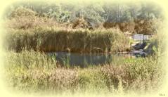 LAKE....SELECTIVE COLORING... (mermaidmania) Tags: lake selectivecoloring