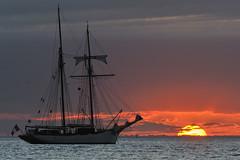La Belle Poule (Brestitude) Tags: sunset sea mer boat brittany bretagne breizh course bateau plage couchédesoleil finistère sailship leconquet blancssablons vieuxgréement goélette d700 labellepoule brestitude