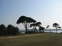 110 (KaRiNe_Fr) Tags: france bretagne pins finistère steanne stpoldeléon