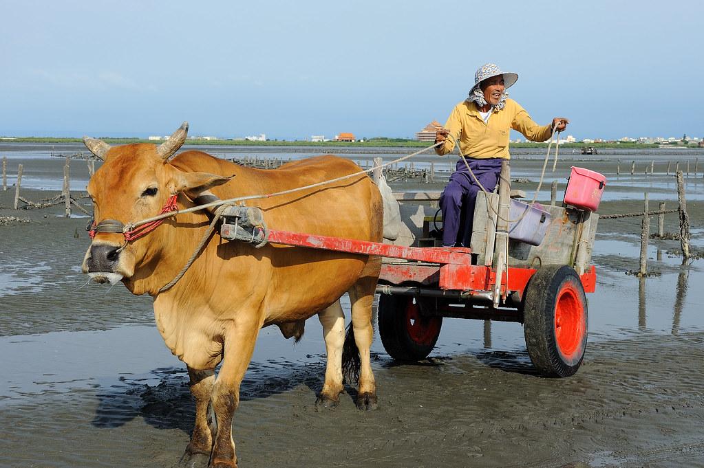「牛車」的圖片搜尋結果