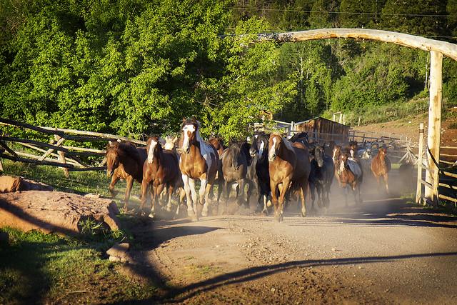 Black Mountain Colorado Dude Ranch horses running