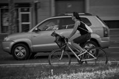Barcelona Dog (Mikael Colville-Andersen) Tags: barcelona dog pet fashion bike bicycle cycling basket cycle bici catalunya chic fahrrad vélo cykel cyclechic velopassioncc