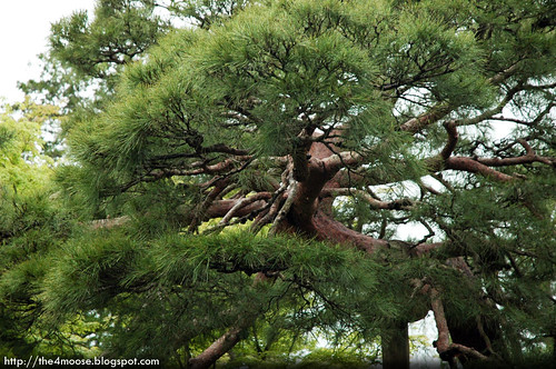 Katsura Rikyū 桂離宮 - Garden
