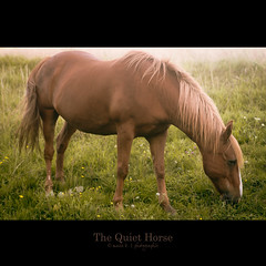 The Quiet Horse (marie b&b | photographie) Tags: summer portrait horse france animal canon cheval freedom countryside soft quiet colours natural sweet country free naturallight libert campagne loh aveyron jument freehorse alezan 2470mmlusm canon5dmarkii chevalenlibert