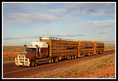 Kurundi Station (Tom O'Connor.) Tags: road station creek train truck canon lens eos long cattle nt south north stock under twin australia down land vehicle outback trucks kit sa through titan northern crate bound mack triple trucking territory truckers tennant coober pedy 2011 1000d kurundi