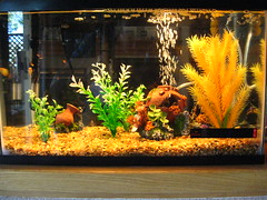 Jet's Aquarium