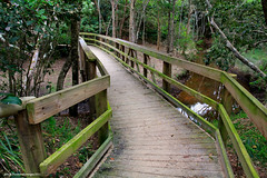 Diamond Beach Littoral Rainforest Boardwalk (Black Diamond Images) Tags: beach australia greatlakes nsw beachaccess diamondbeach bdi hallidayspoint midnorthcoast diamondbeachlittoralrainforest diamondbeachsouth dblrfarfp dblrf diamondbeachlittoralrainforestwalk hallidayspointtourism