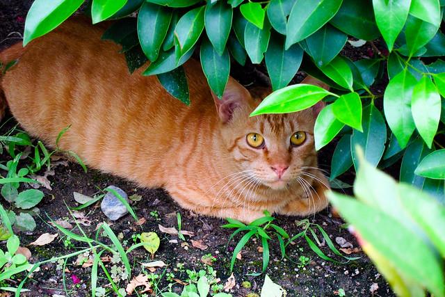 Today's Cat@2011-08-20
