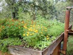 CIMG5487 (TheBosque) Tags: plants arcoiris casita sauna greenroof earthroof faceaug1 virtualbosque