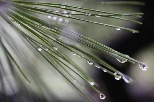 冷たい雨 / Comfortable rain