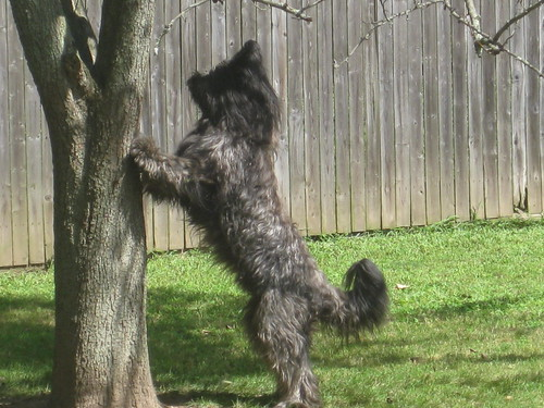 2011 08 23 giant ridiculous dog 002
