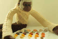 Shell Collection (Girl Number 11) Tags: sea brown white holiday beach toy monkey sweater joshua handmade cream shell knit josh ape jersey periwinkle seashell jumper knitted gibbon