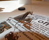 Praying Mantis (Andrew Stevenson (Spud)) Tags: mantis praying