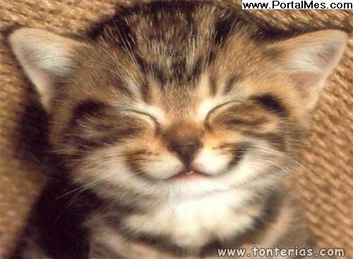 Gatito sonriendo