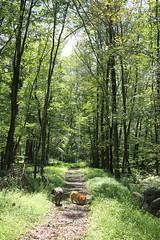 hickory run state park (fiver753) Tags: summer dogs nature outside corgi hiking pennsylvania pitbull molly trail ein hickoryrunstatepark