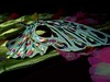 Madame Butterfly. (syam C) Tags: green butterfly crossprocessed colours shadows mask silk australia melbourne victoria iridescent moh 1873 2011 canona710 tradeshallbuilding coffeeshopaction melbourneopenhouse