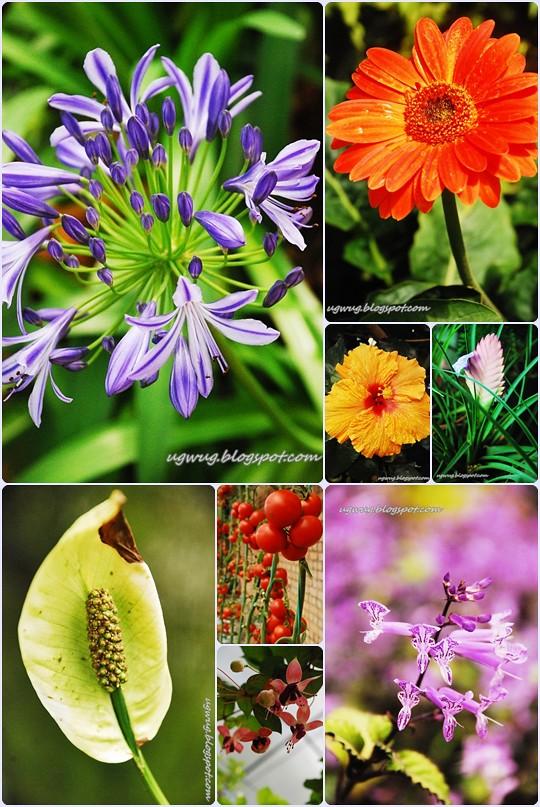 Flora wonder